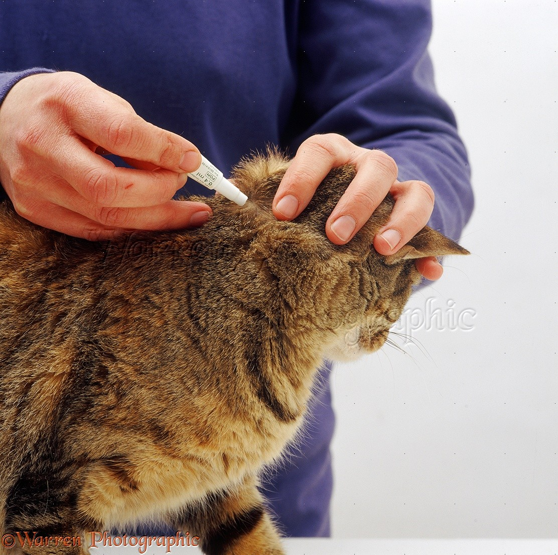 Как избавиться от блох у кошки в домашних условиях Ваши Питомцы 79